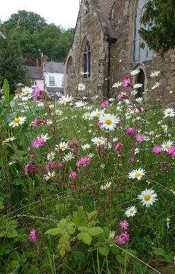 Wildflowers in the churchyard